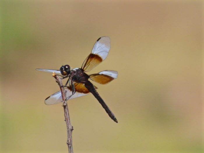 NATADVEN-InsectSafari